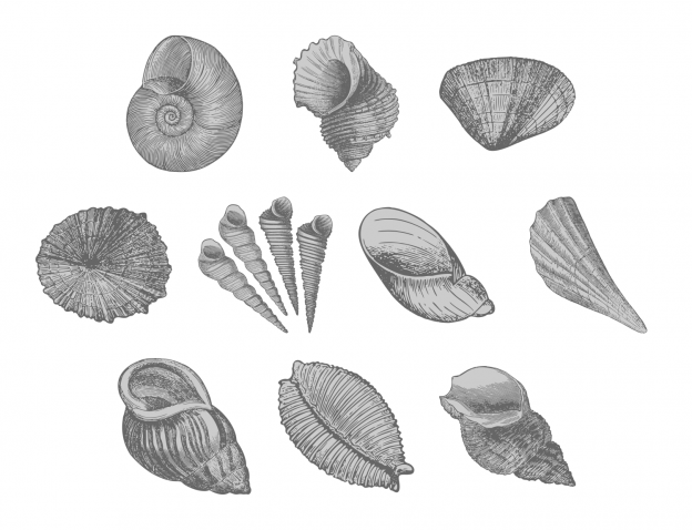 Lovely Seashells Journal Templates Journal Graphics Grayscale