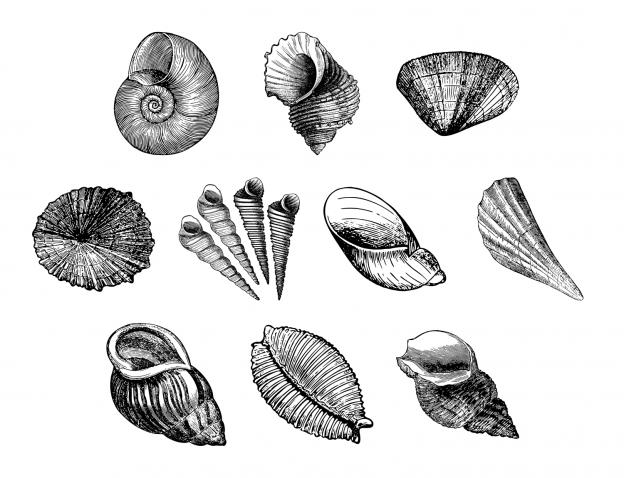 Lovely Seashells Journal Templates Journal Graphics Lineart