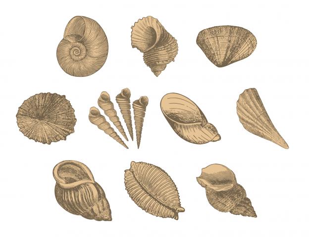 Lovely Seashells Journal Templates Journal Graphics Sand